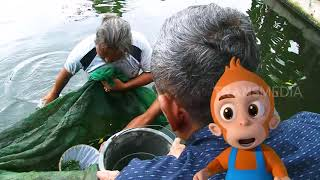 Video Ikan Cae, Si Mulut Kuat Penyedot Lumut | Si Otan (13/02/19) Part 1 MP3, 3GP, MP4, WEBM, AVI, FLV Maret 2019