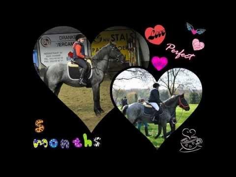 Video my horse xxx :) Meggie download in MP3, 3GP, MP4, WEBM, AVI, FLV January 2017