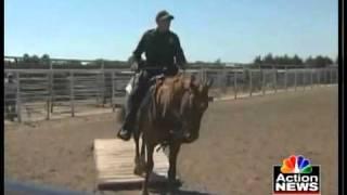 Hutchinson (KS) United States  City new picture : Hutchinson prisoners train horses for border patrol
