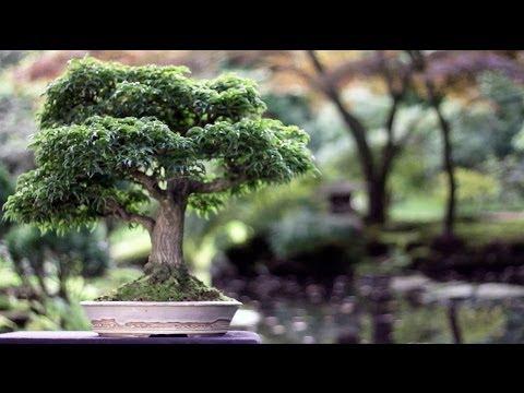 coltivazione e stili dei bonsai