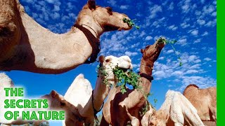 Video Libyan Sahara Water from the Desert - The Secrets of Nature MP3, 3GP, MP4, WEBM, AVI, FLV September 2018