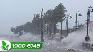 Nông nghiệp | Không chủ quan kể cả khi bão số 6 không đổ bộ trực tiếp
