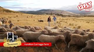 Hamilton (Tasmania) Australia  city photo : 12flyTV - Dorothy at Curringa Farm, Hamilton, Tasmania