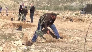 حملة لغرس أشجار الزيتون في الأراضي المجاورة للكسارات