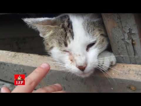 Los animales, también fueron víctimas del terremoto en México
