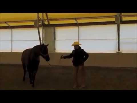 "Habits of a Horseman- Teaching the Backward ""S"" Pattern"