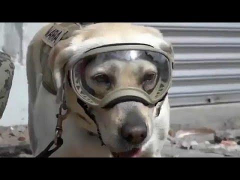 Φρίντα, ο σκύλος που σώζει ζωές