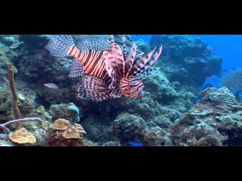 Waterways Episode 262 - Invasive Exotics in South Florida, Tegus and Lionfish
