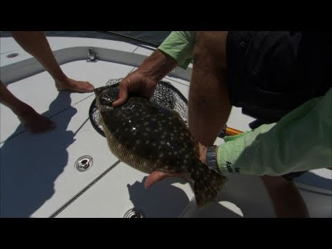 St. Augustine Floundering - COBIA, REDFISH and more