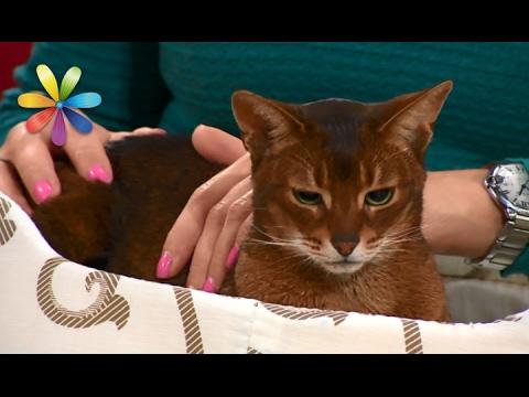 Вы и не подозревали, чего на самом деле боятся ваши кошки! – Все буде добре. Выпуск 960 от 02.02.17 (видео)
