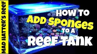How to Add Sponges to a Reef Tank