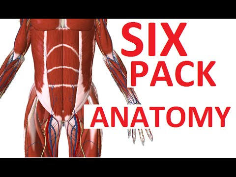 Six Pack Or Abs Abdominal Muscles Anatomy Standoutinthesideline