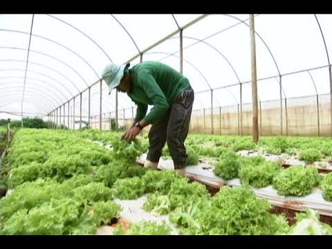 Produtores rurais ganham mais um ano para renegociarem suas dívidas
