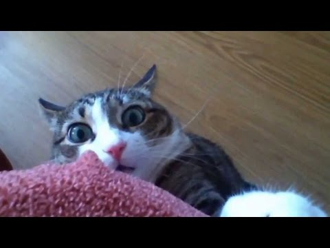 Cats - Stalking Cat | Stalking Cats | Stalking Kitten | Stalking Kittens | Funny Stalking Cat | Funny Stalking Cats | Funny Stalking Kitten | Funny Stalking Kittens...
