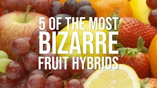 5 of the Most Bizarre Fruit Hybrids by Chowhound