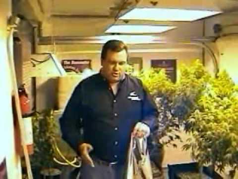 Steve Kubby Growing Marijuana – Light Intro
