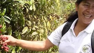 La Guardiana del Bosque Mélida Ruíz