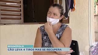 Reginópolis:  cachorro atingido por quatro  tiros se recupera e precisa de um lar