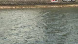 ガタピン 大分県 チヌ攻略 ボート編 1アングラー:緒方裕次郎