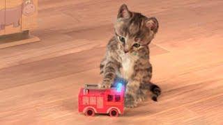 Video Little Kitten My Favorite Cat Play Fun Pet Care Game for Children MP3, 3GP, MP4, WEBM, AVI, FLV Januari 2019