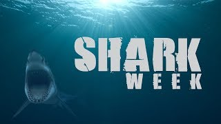 SharkWeek  Starts TONIGHT! Shark numbers are on the rise, but they're still climbing from a deep decline.