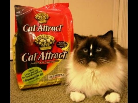 0 Dr. Elseys Cat Attract Cat Litter   Floppycats.com Review