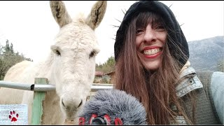 Meet some of the luckiest equines in Greece | Horse + Donkey Athens Tour by The Orphan Pet