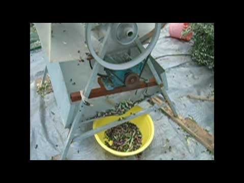 ΕΛΙΑΣ - Πρακτικός τρόπος συλλογής ελιάς, διαχωρισμός καρπών, τεμαχισμός κλαδιών και ζωοτροφή - εδαφοκάλυψη.