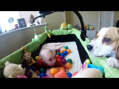 cute dog surprised little baby and created ball party in her crib