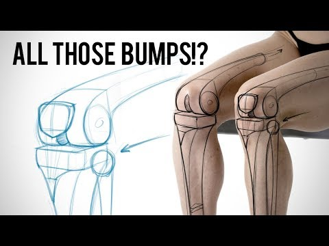 What Are All Those Bumps? Learning Leg Bone Anatomy