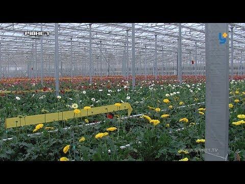 """Квітучий бізнес: від троянд до """"атомних"""" гербер [ВІДЕО]"""