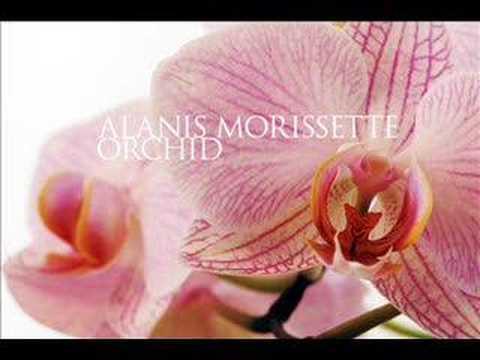 Tekst piosenki Alanis Morissette - Orchid po polsku