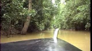 Borneo part ONE  to  Pygmy Elephants in Sungai Kinabatangan