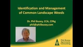 Selection of warm-season turfgrasses St. Augustinegrass, bermudagrass, bahiagrass, centipedegrass, zoysiagrass, and seashore...