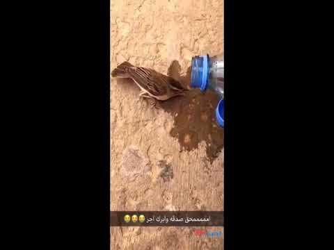 العرب اليوم - رد فعل رجل لحظة خطف قط عصفورًا من أمامه