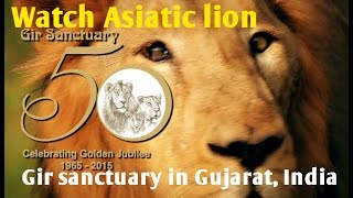 Video Why just Asiatic lion live only in the Gujarat's Gir sanctuary? Encounter with Biodiversity of Gir MP3, 3GP, MP4, WEBM, AVI, FLV Juli 2017