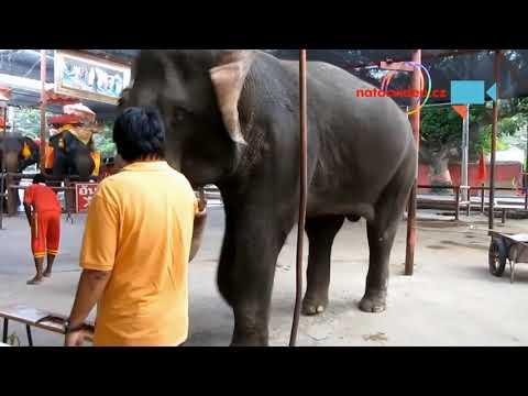 Za penízky i slon