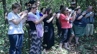 Video Wild King Cobra Rescued and Safely Released into the Forest MP3, 3GP, MP4, WEBM, AVI, FLV Oktober 2018