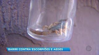 Bariri: Prefeitura realiza mutirão de limpeza para combater escorpiões