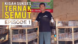 Download Video Kisah Sukses Ternak Semut Kroto Bisa Pergi Umroh dan Untung Berlipat MP3 3GP MP4