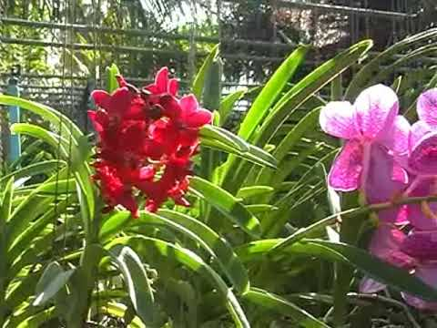 Orchid Nursery at Thai Phuket Orchid Farm