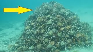 Video Divers Think Everything Is Normal In The Water Until They Spot This Pile Of Nightmares MP3, 3GP, MP4, WEBM, AVI, FLV Januari 2018
