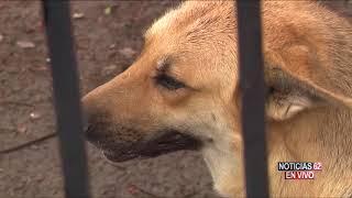 Matan a perro labrador- Noticias 62 - Thumbnail