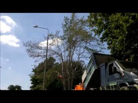 Time Lapse #4 - Dying Elm Tree Dismantle, Helsby, Cheshire