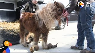 Download Youtube: Neglected Pony Hooves Were So Long He Couldn't Walk | The Dodo: Comeback Kids