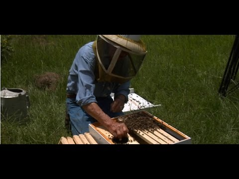 Episode 3 – Your First Bees