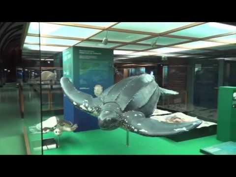 Meeres-Legenden - was ist wahr an ihnen und was nicht ...