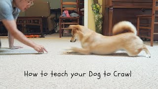 First time teaching her this trick!Can we get Haru 1000 likes for her efforts??Thank you for all your love and support!Follow Haru on Instagram @ HaruShibainu