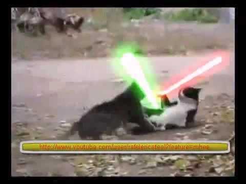 video que muestra a dos gatos peleandose con espadas laser