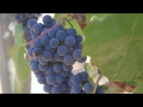 Impact of California's Drought on U.S. Wine Prices
